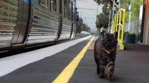 gatto,gatto tonato,gatto torna a casa,graeme