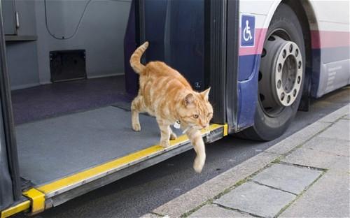 dodger,gatto,bus